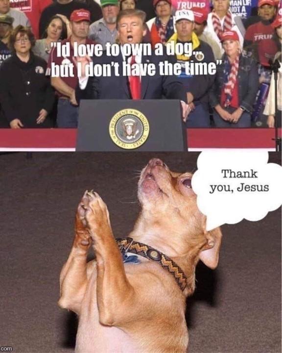 Luckily for a doggo
