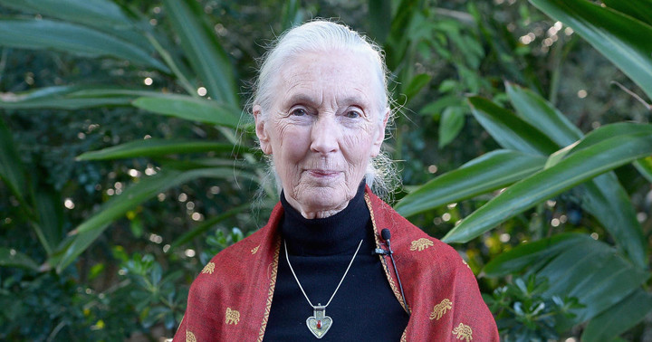 """Jane Goodall on conservation, climate change and COVID-19: """"If we carry on with business as usual, we're going to destroy ourselves"""""""
