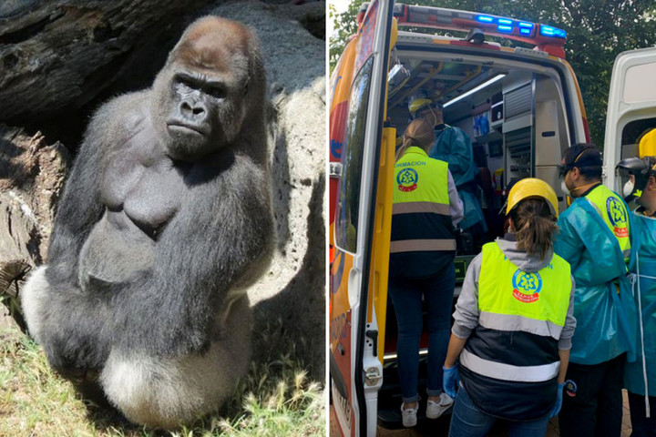 Zoo keeper mauled by gorilla after animal broke through three safety doors