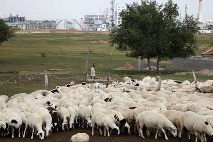 Bubonic Plague Found in a Herder in Inner Mongolia. Why not?  Par for the course in 2020