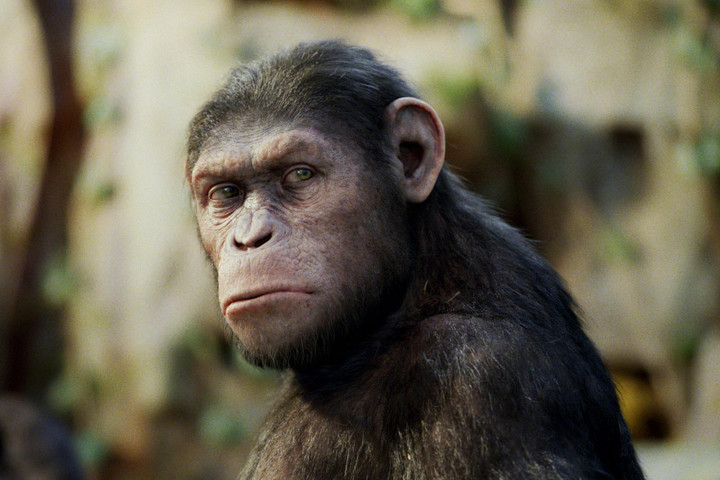 Scientists splice HUMAN genes into monkey brains in terrifying experiment