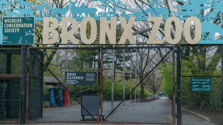 Appeals court upholds ruling over Bronx Zoo elephant